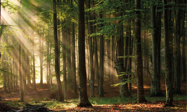 Read more about the article Le qualità del legno e la polisensorialità della materia